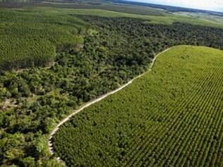 Plantio comercial de florestas é de R$ 3 milhões
