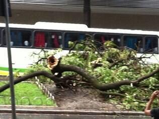 Chuva provoca quedas de árvores em Belo Horizonte nesta terça-feira