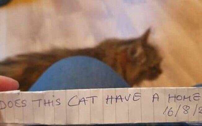 Gata volta para casa com um bilhete e dona descobre algo inusitado sobre o pet