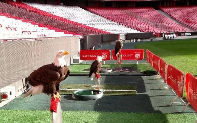 Em passeio pela casa do Benfica, turistas podem conhecer as águias mascotes do time