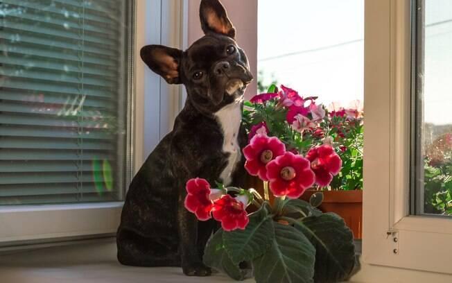 Algumas plantas são tóxicas para os animais de estimação e os donos devem ficar atentos