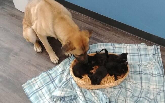 Cadela e filhotes de gato que ela protegia