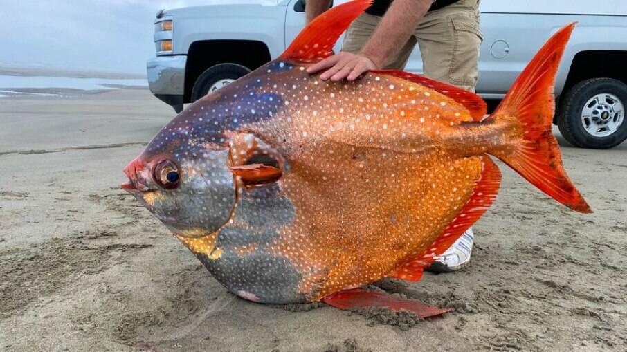 Espécie de peixe-lua encontrado pesava 45 quilos medindo pouco mais de um metro