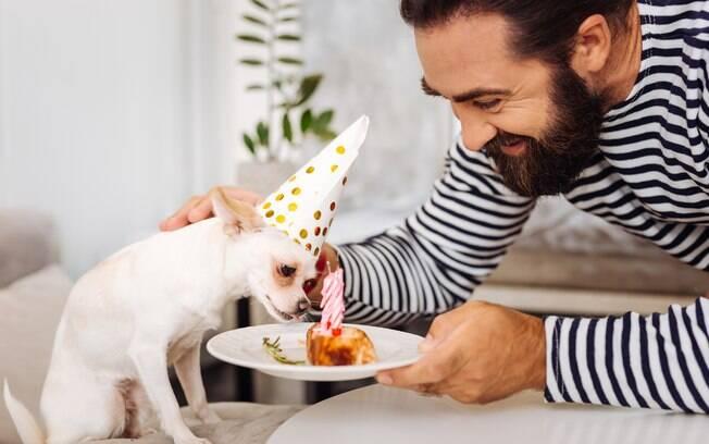 O bolo para pet deve ser feito com ingredientes próprios para animais
