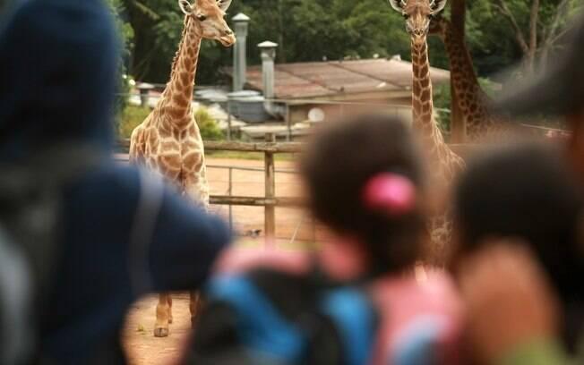 Os zoológicos das cidades são um programa bacana para dias ensolarados