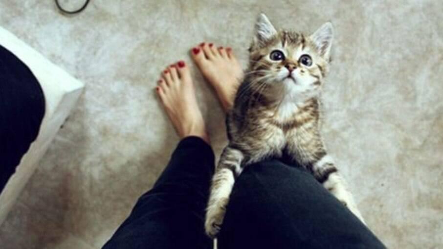 Os gatos estão conquistando mais espaço nos lares e corações dos brasileiros