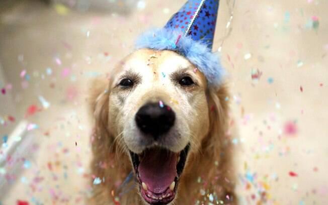 Dicas para fazer festas de cachorro com segurança