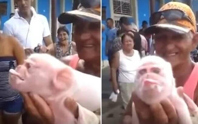 Porco nasce com cara de macaco em Cuba