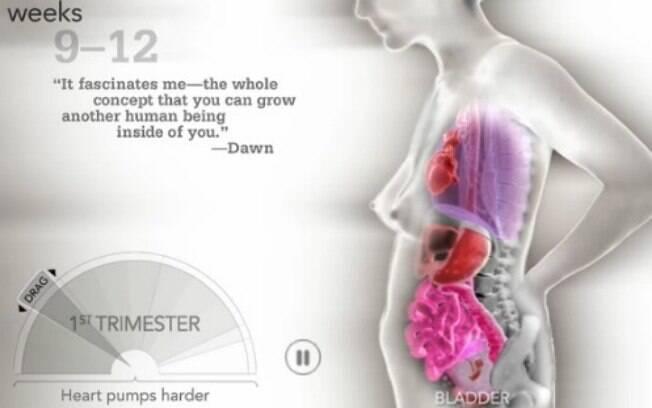 O vídeo mostra como o corpo da mulher muda nos três trimestres de gestação