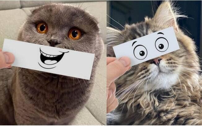 Gatos e expressões faciais