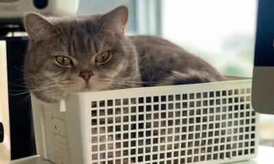 Homem tem ideia genial para trabalhar com o gato em casa