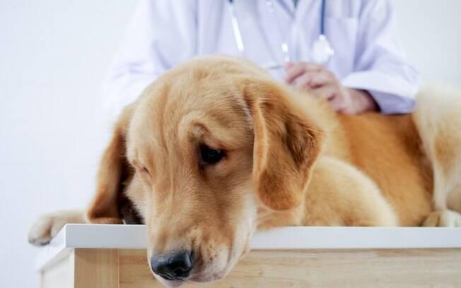 Assim como todo o corpo, o sistema digestivo do cão também sofre quando algo afeta o organismo
