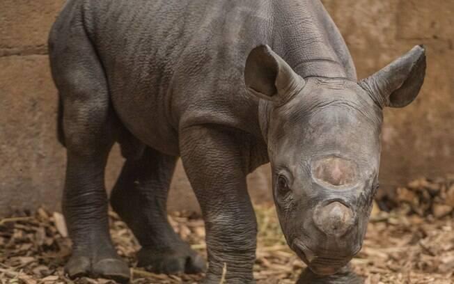 Rinoceronte foi atacado dentro de parque.
