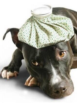 Os donos precisam ficar atentos as doenças de cachorros
