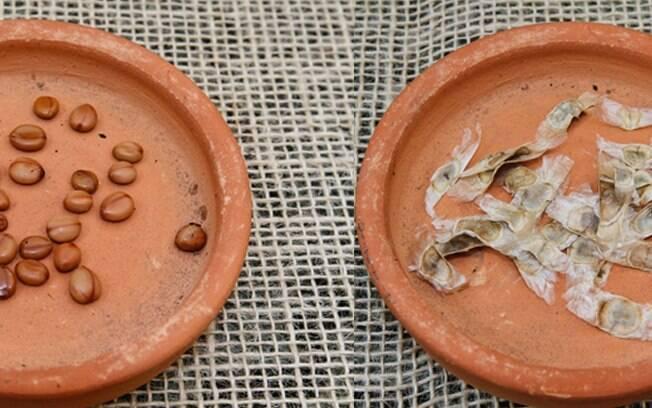 As sementes podem ser aéreas (bem finas, como as de ipê) e as terrestres