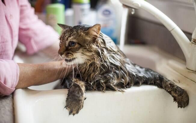 É necessário dar banho em gatos com água morna.