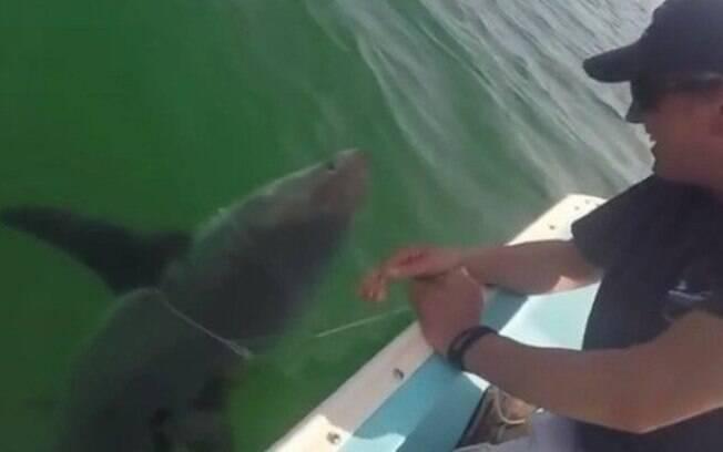 Segundo informações, animal recebeu ajuda após ficar encalhado em praia