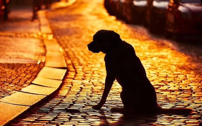 Com o RGA o cachorro pode ser identificado e devolvido para os seus donos caso se perca.