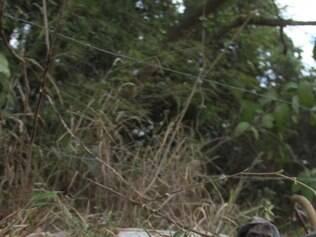Corpo foi encontrado em um estrada de terra