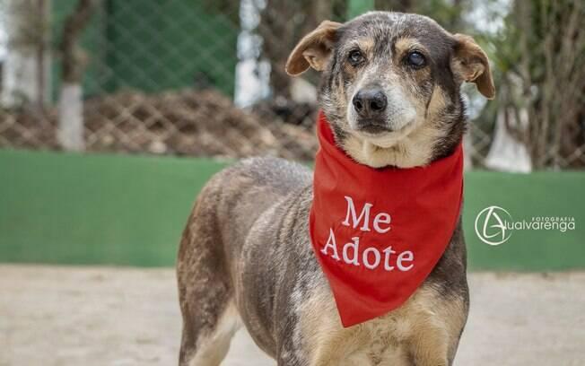 Nega é um dos cachorros para adoção da ONG Anjos dos Bichos