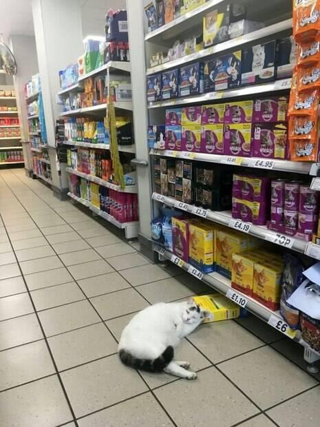 Gato gordinho foi flagrado por cliente dormindo em corredor de alimentos para animais de estimação