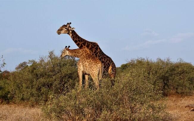 Famoso pelos safaris fotográficos, o Kruger Park oferece as melhores e mais tradicionais opções para esse tipo de passeio