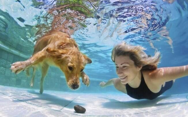 Natação é um dos exercícios para cachorros e gatos indicados