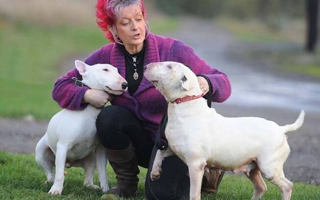 Liz e alguns de seus Bull Terriers resgatados