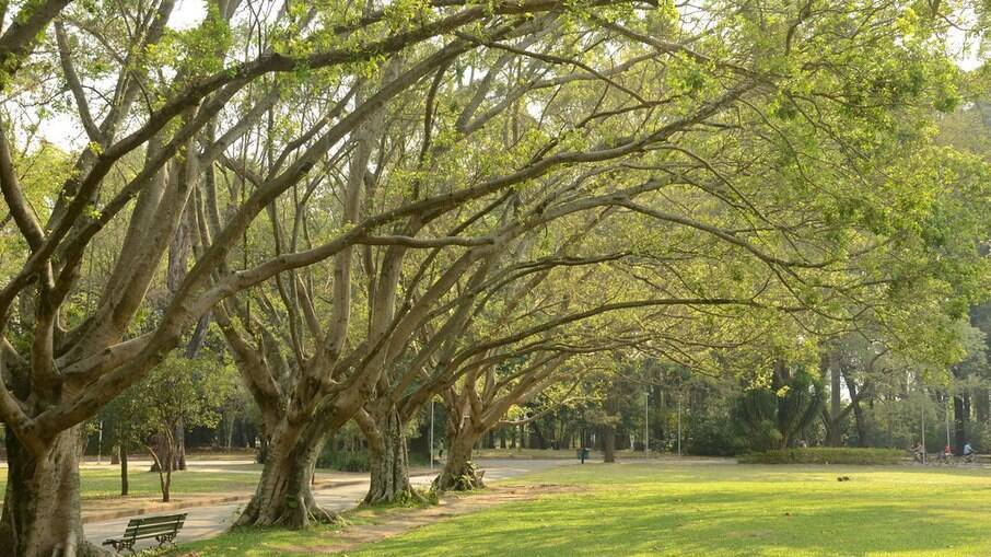 Parques poderão reabrir a partir deste final de semana; veja detalhes da nova fase