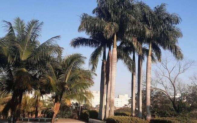 Sexta-feira será de clima ameno com máxima de 26ºC em Campinas