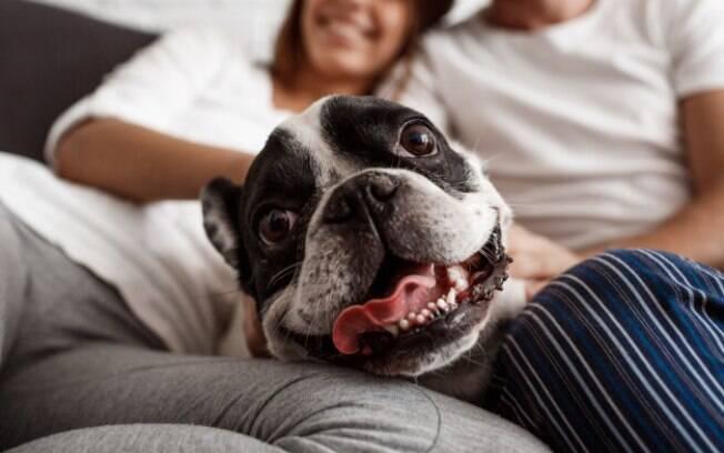 Em caso de divórcio, há meios legais para dividir a guarda do pet