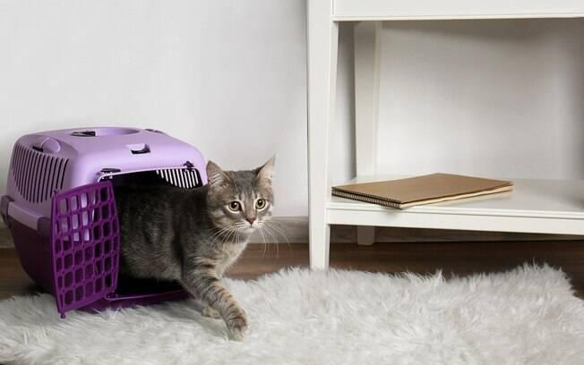 A caixa de transporte deve fazer parte da mobília da casa