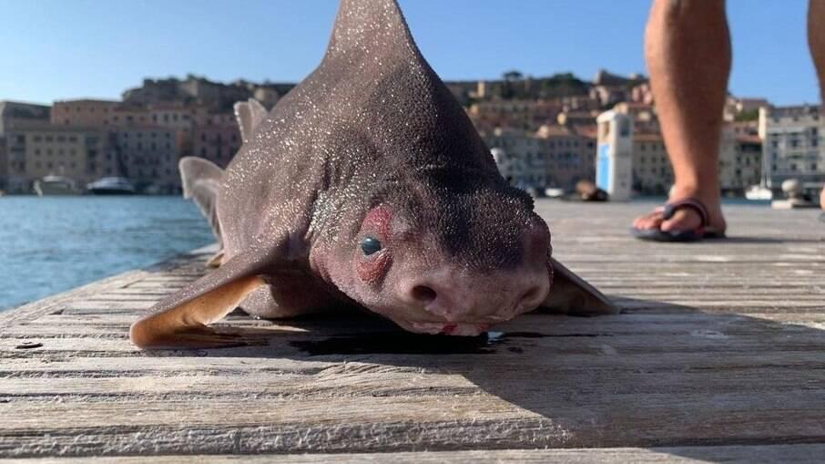 Animal foi encontrado na Itália