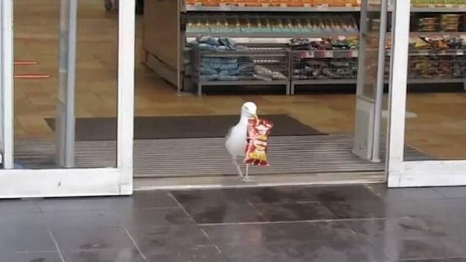 Gaivota entra em mercado, rouba pacote de batatas fritas e vai embora