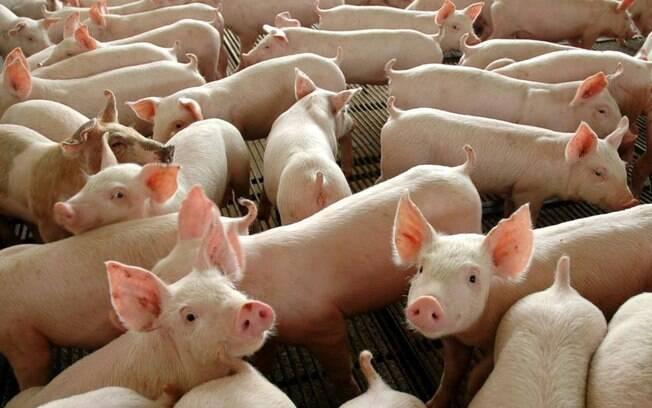 Bolsonaro afirmou em suas redes sociais que a China autorizou importação de gordura de porco do Brasil