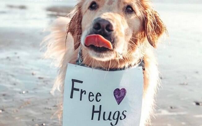 Cão distribui
