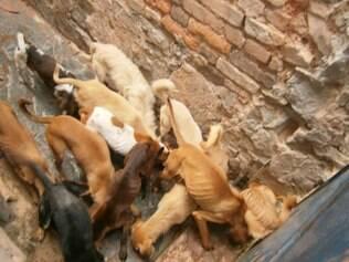 Na primeira visita, protetora jogou ração pelo portão e se emocionou com a reação dos cães famintos, que brigaram para se alimentar