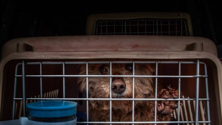 Os ativistas disseram que os animais aparentavam já terem sido cachorros de estimação