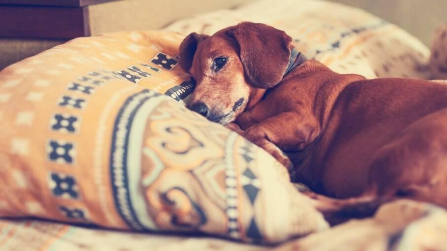 Epilepsia canina, como cuidar do seu amigo em casos de crise