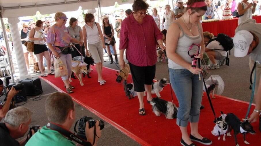 Maior cerimônia de casamento de cachorro do mundo, realizada em 2007