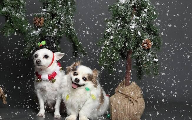 Dupla de cachorros em foto de Natal