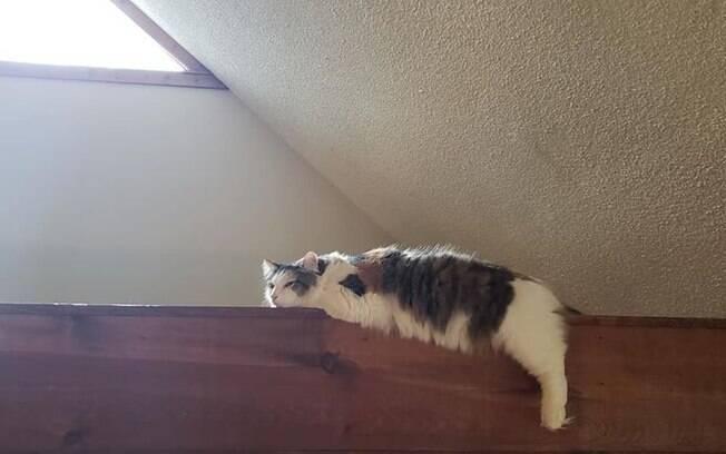 Gata em cima de viga