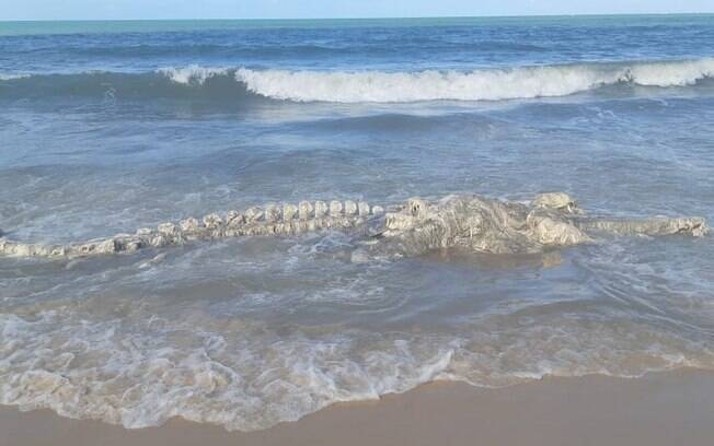 Esqueleto de animal marinho foi encontrado na praia do Muriú, no município de Ceará Mirim