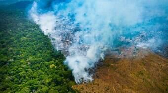 Política ambiental de Bolsonaro já prejudica empresas brasileiras