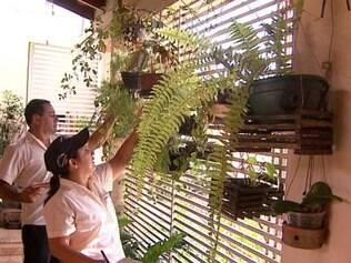 De acordo com a gerente de vigilância ambiental e zoonoses de Campina Grande, Rossandra Oliveira, índice é preocupante e mostra que a maior parte dos mosquitos não está em terrenos baldios e sim dentro de casa
