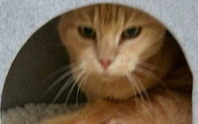 E numa curiosa coincidência, acabaram encontrando o gato Phoenix justamente quando resolveram adotar um novo gatinho.