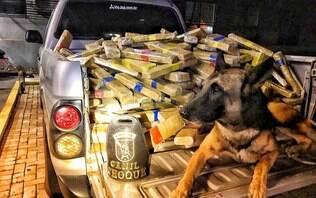 Polícia Federal apreende mais de meia tonelada de maconha em caminhão de milho
