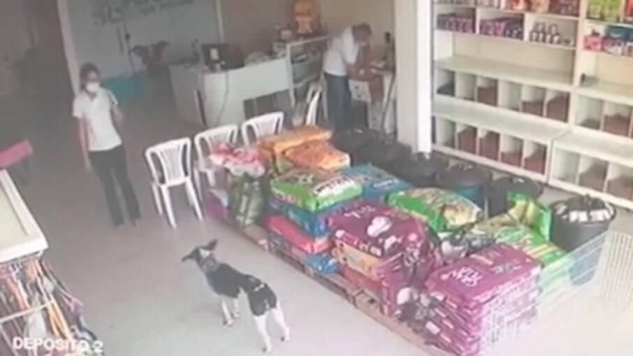Cachorro machucado entra em clínica veterinária e recebe cuidados de profissionais veterinários