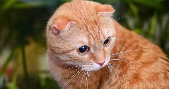 Sabe o que é FIV? Conheça tudo sobre a temida Aids felina