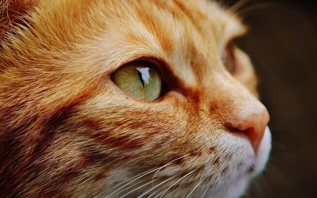 O comportamento das gatas muda completamente durante o cio